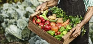 salud alimentos slow food